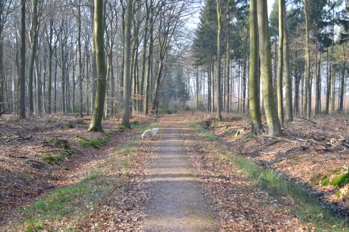 February 2015 incl trip to Holland 069